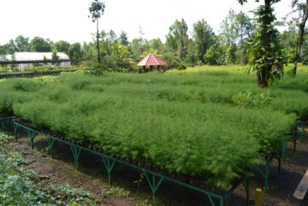 Nursery- area pembibitan tanaman