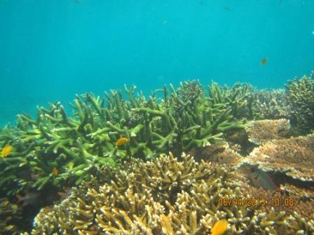Underwater Gili Trawangan