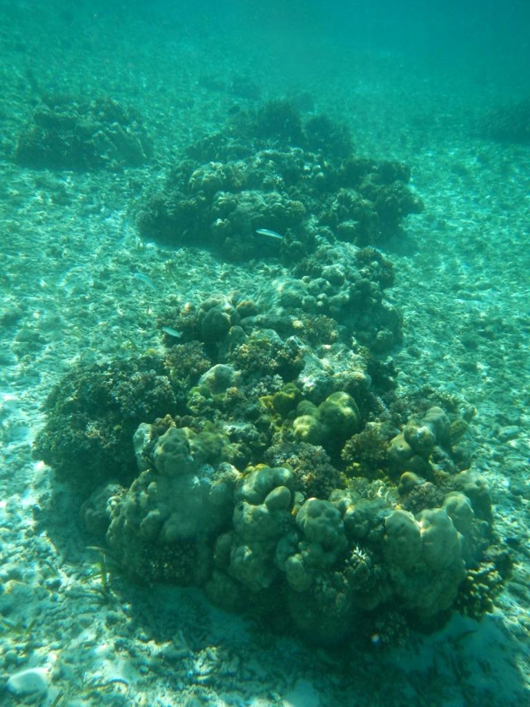 Snorkling Pulau Lanjukang
