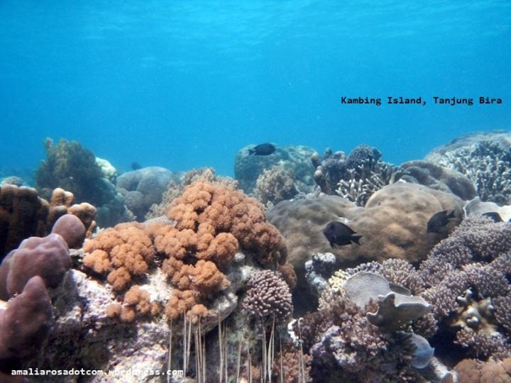 Terumbu Karang Pulau Kambing