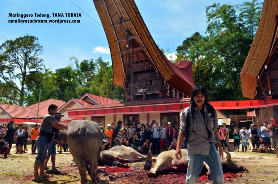 I'm done. Kata si Tukang Jagal. Photo by Sarsongko.