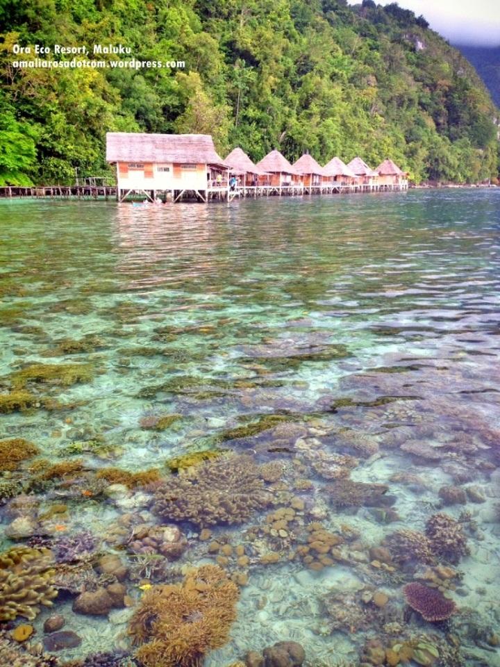 Ora Eco Resort, Maluku- See the clear water! Tinggal lompat aja dari kamar ini.