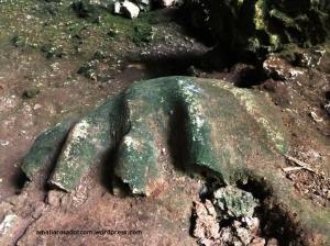 Fossil kima di dalam Goa Tajuiya