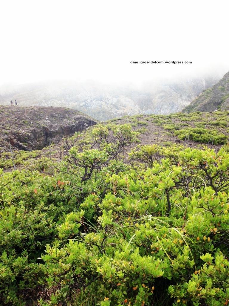 Vegetasi khas pegunungan di Kelimutu