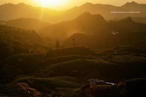 Sunset di Perkebunan Teh Malino, Gowa