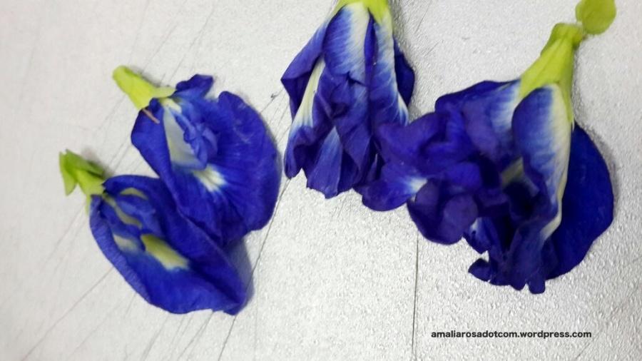 Bunga Telang Kelopak 1 dan 5. Photo by Anjar