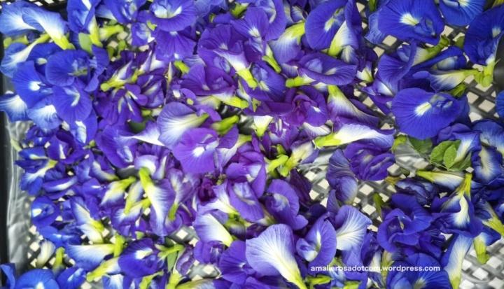 Bunga Telang panenan Anjar di belakang Lab kampusnya. Photo by Anjar